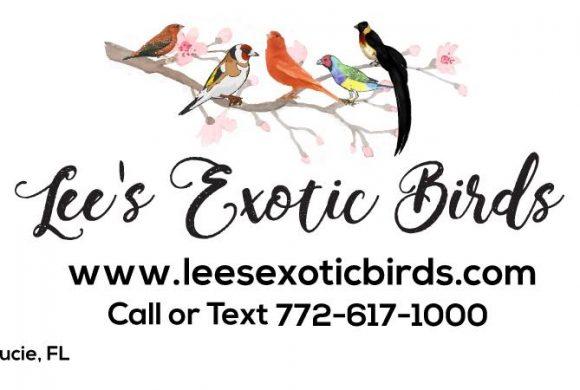 Lee's Exotic Birds (6.22.2021)